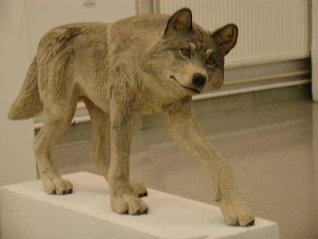 Изумлённый волк, 110 см.