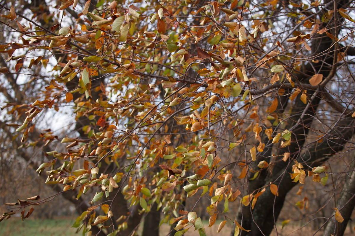 Краски уходящей осени.