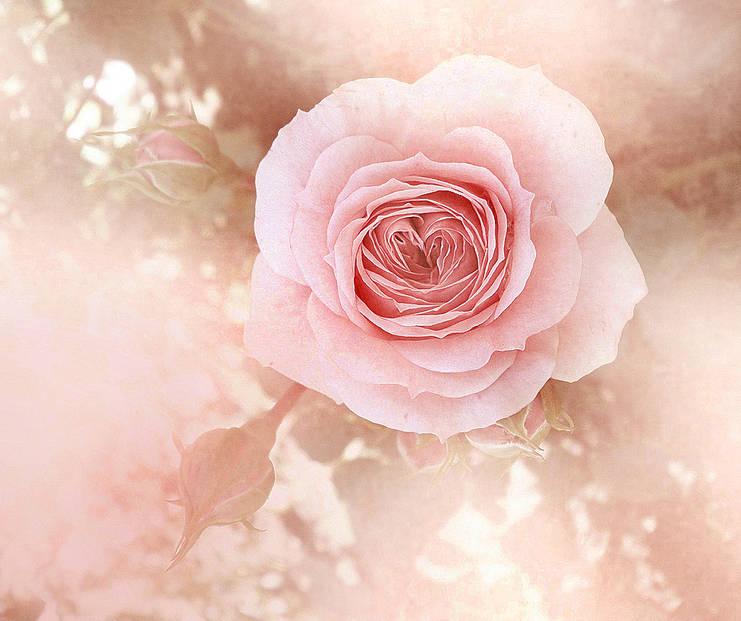 А сердце прекраснее сада Цветущей весенней порой...