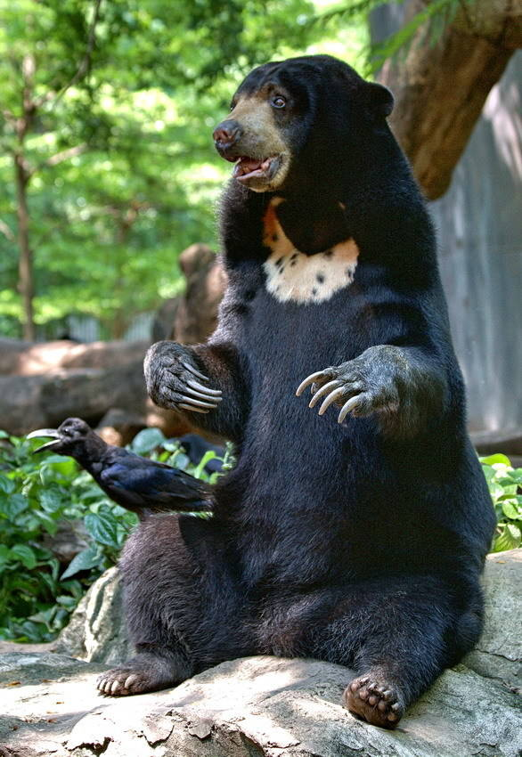 Забавные животные (Funny animals)