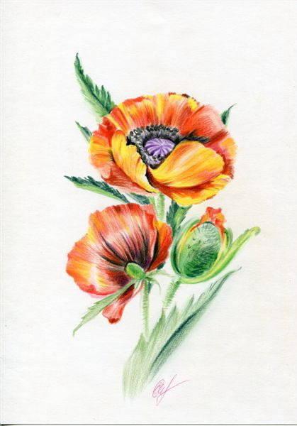 Цветы в графике