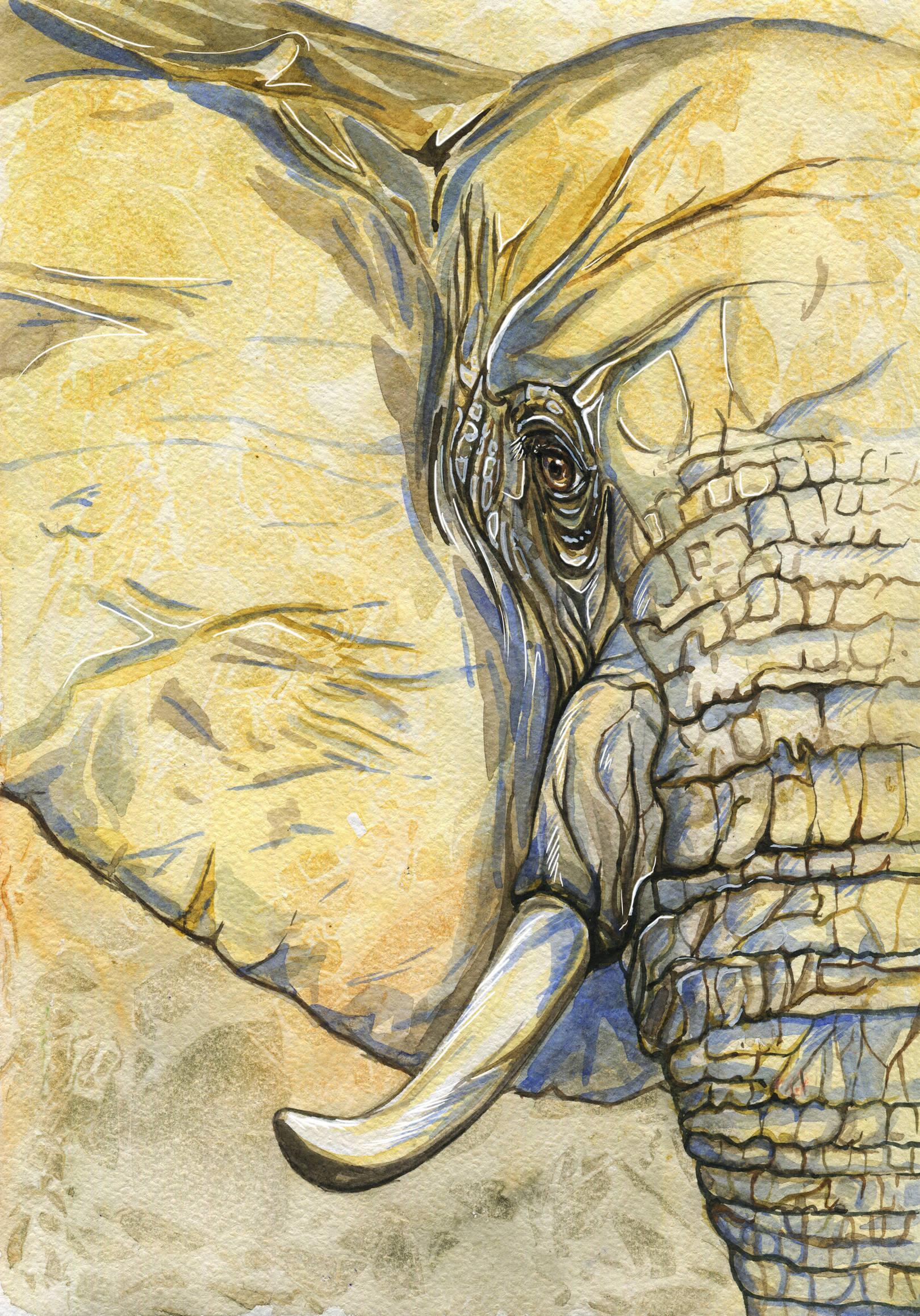 Elephant. Watercolor. A4
