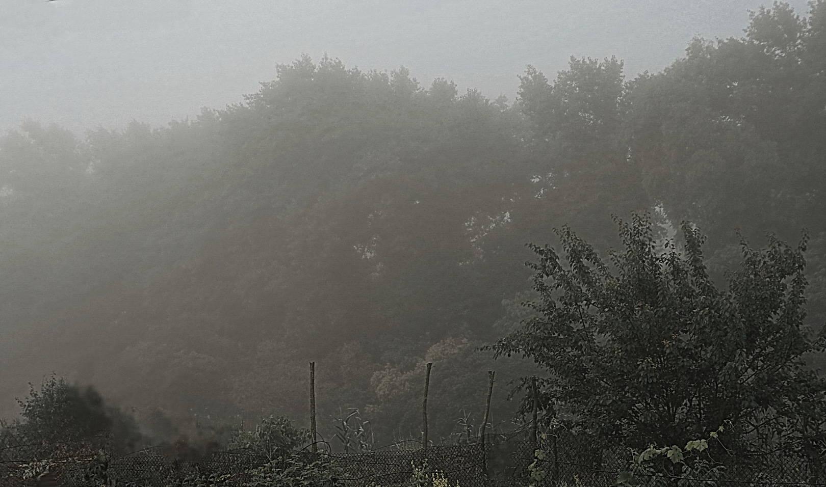 туман на даче
