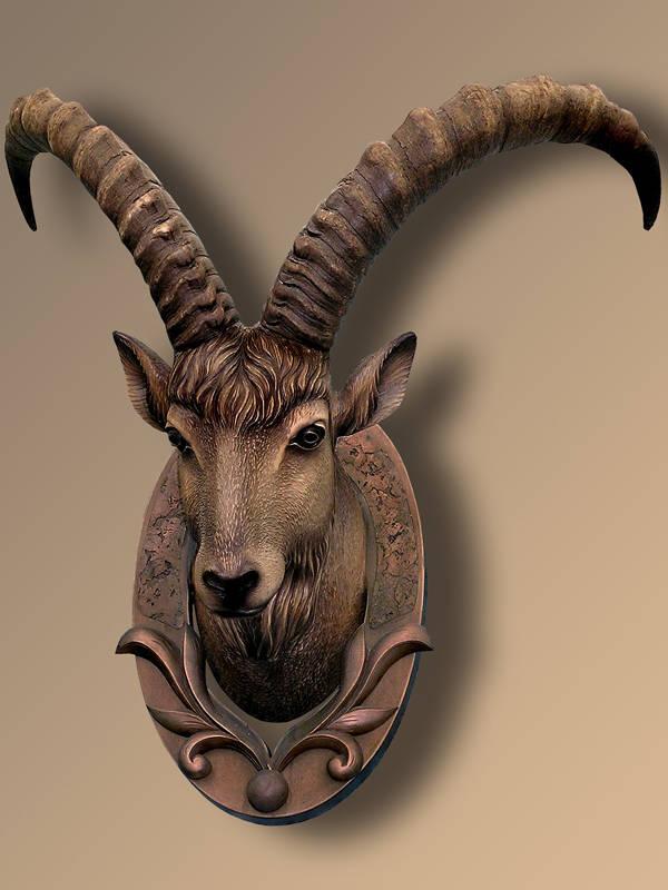голова кавказского козла