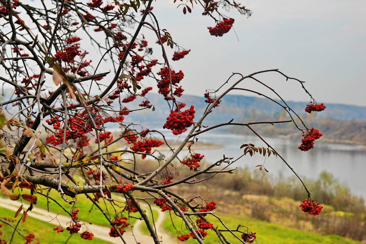 Осень в Тарусе.