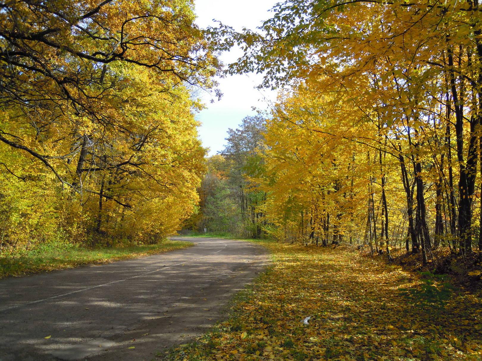 дорога на Мотронинский монастырь