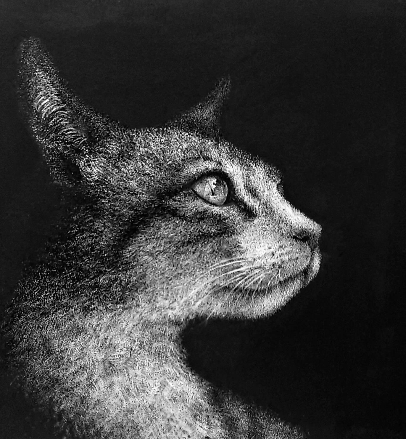 Котик в технике пуантилизьм