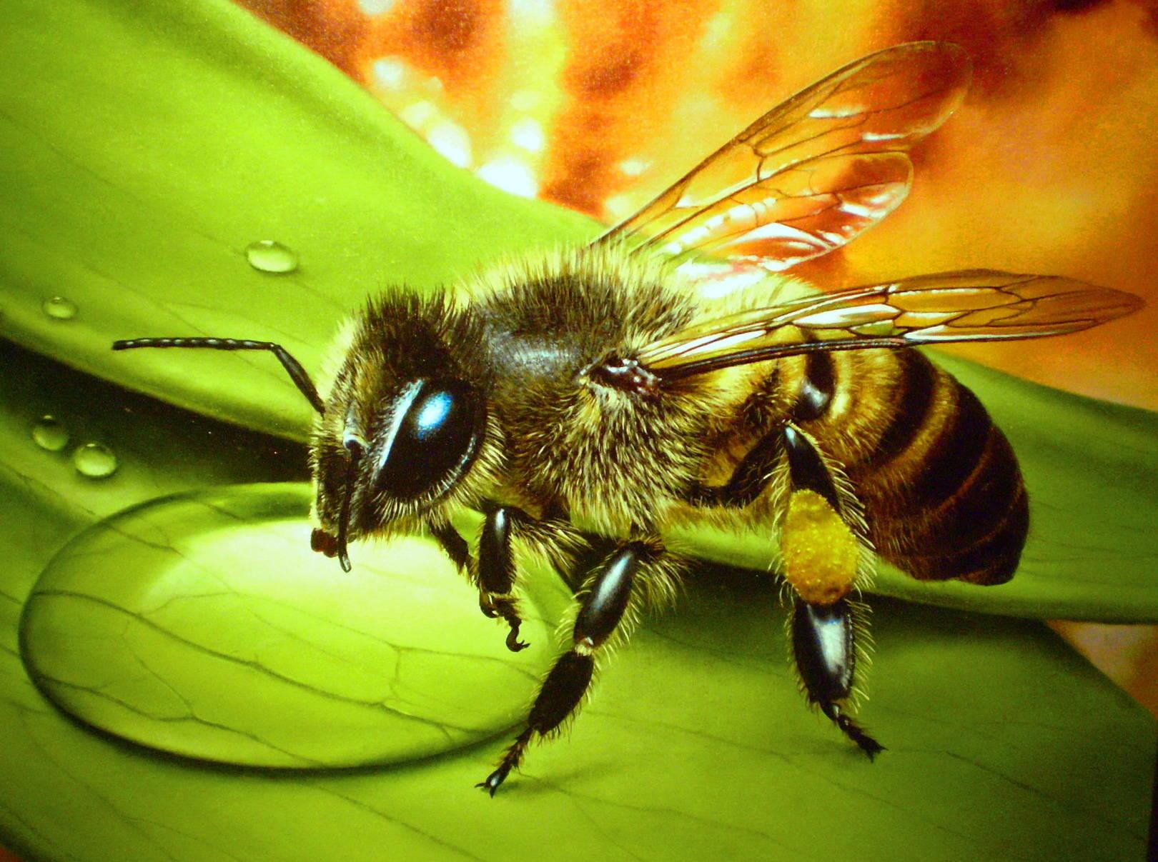 Пчела холст, масло, 32х27